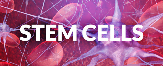 Stem Cells 101: What Are Stem Cells and Why Are They Important?