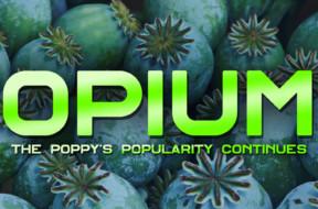dr-drew-opium-poppy-polularity-2018-thumbnail