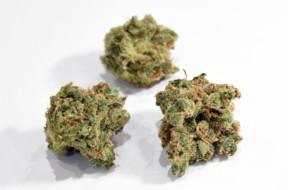 Recreational Use Of Marijuana Becomes Legal In Nevada